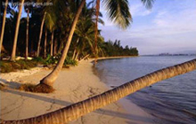 Palm Tress on Beach, Thaialnd / Image by Joe Cummings